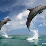 Темный дельфин