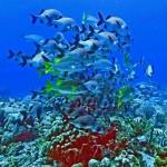 Будущее океанологии. Часть 1